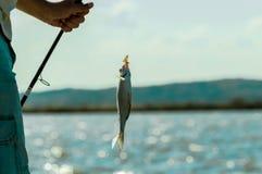 ryba na haczyku Fotografia Stock