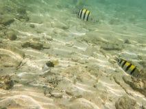 Ryba na piaskowatym dnie morskim zdjęcie stock