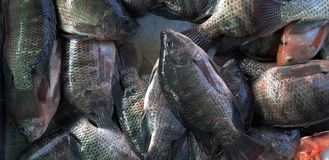 Ryba na rybim kramu zdjęcia stock
