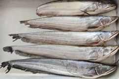 Ryba na tacy Zdjęcia Stock