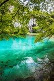 Ryba pływa pod gałąź drzewo w jeziorze z turkus wodą Plitvice, park narodowy, Chorwacja obraz stock