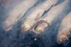 ryba piec na grillu Obraz Royalty Free