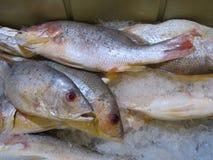 Ryba przy owoce morza rynkiem Obraz Royalty Free