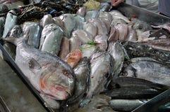 Ryba przy rynkiem Fotografia Stock
