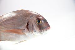 Ryba przygotowywająca gotującą Obrazy Stock