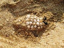 Ryba robić od piaska i skorup Zdjęcie Royalty Free