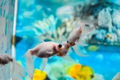 Ryba rozmowy Zdjęcia Royalty Free