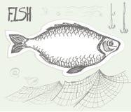 Ryba, rysująca w ołówku również zwrócić corel ilustracji wektora Fotografia Stock