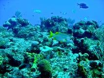 ryba uczą kogoś tropikalnego Zdjęcie Stock