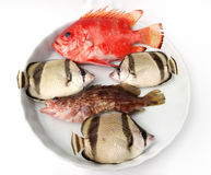 ryba ustawiają tropikalnego Obraz Royalty Free