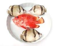 ryba ustawiają tropikalnego zdjęcie royalty free