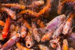 Ryba w dużo cienie obraz royalty free