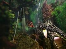 Ryba w fishtank zdjęcie royalty free
