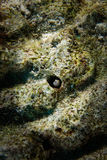 Ryba w koralach Zdjęcie Royalty Free