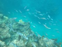 Ryba w morzu Obraz Stock