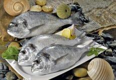 Ryba w porcelana talerzu Fotografia Royalty Free