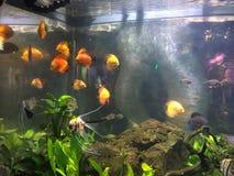 Ryba w rybim pucharze zdjęcia stock