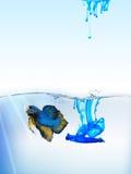 Ryba w skażającej wodzie zdjęcie stock