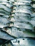 Ryba w sklepie Obrazy Stock