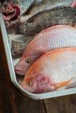 Ryba w tacy Zdjęcia Royalty Free