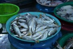 Ryba w Targowym schronieniu Zdjęcia Stock