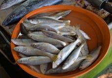 Ryba w Targowym schronieniu Obraz Royalty Free