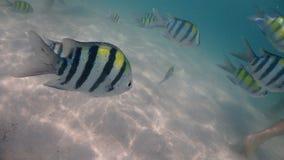 Ryba wokoło Phuket wyspy w Tajlandia obraz stock