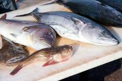 ryba wprowadzać na rynek śródziemnomorskiego Fotografia Stock