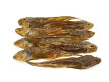 ryba wysuszony morze niektóre Obrazy Royalty Free