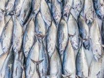 Ryba wzór lub tuńczyka wzór Obrazy Stock