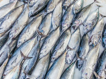 Ryba wzór lub tuńczyka wzór Zdjęcia Royalty Free