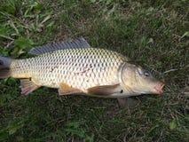 ryba złapana zdjęcia royalty free