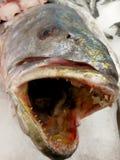 ryba z dużym usta Fotografia Royalty Free