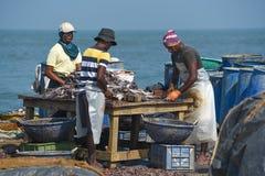 Rybacy czyści ryba dla suszyć Zdjęcia Royalty Free