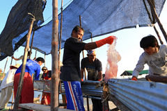 Rybacy przetwarza jellyfish chwyta od morza Obrazy Stock
