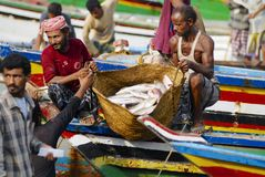 Rybacy rozładowywają chwyta dzień, Al Hudaydah, Jemen Obrazy Stock