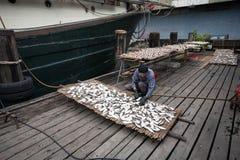 Rybak przygotowywa ryba dla suszyć w połowu porcie w Macau fotografia royalty free
