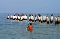 rybak wybrzeże Florydy Obrazy Royalty Free