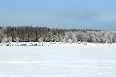 Rybaka chwyta ryba w zimie na rzece na jasnym dniu Zdjęcie Stock