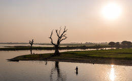 Rybaka i drzewa sylwetka, Amarapura, Myanmar Fotografia Stock