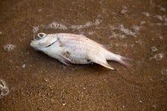 Rybi ścierwa przy Pattaya plażą, Tajlandia obraz royalty free