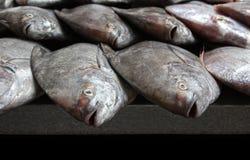rybi świeżego rynku rzędy Obraz Stock