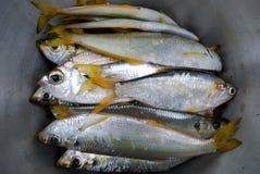 rybi świeży Fotografia Stock