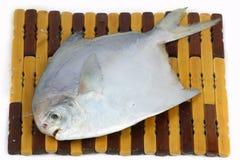 rybi świeży Obrazy Royalty Free
