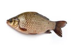 rybi świeży Zdjęcia Royalty Free