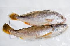 rybi świeży morze Fotografia Stock