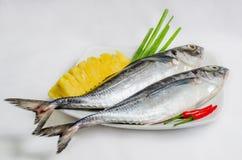 rybi świeży morze Obraz Stock