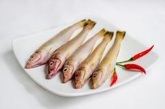 rybi świeży morze Fotografia Royalty Free