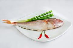 rybi świeży morze Obrazy Royalty Free