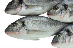 rybi świeży Pacific Fotografia Royalty Free